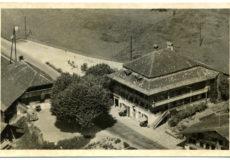 Hirschen Alte Postkarte