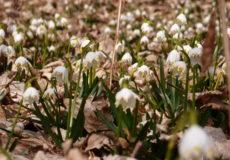 Frühjahr 14 Schnee Olga 042